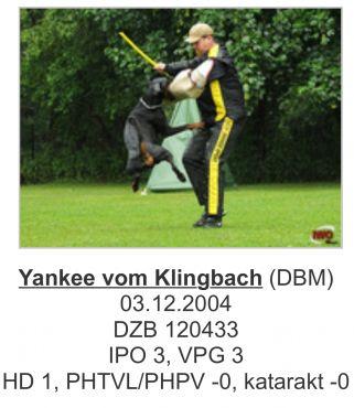 Yankee Vom Klingbach