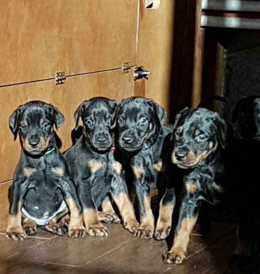 New Puppies in the Kennel 42g lettera E